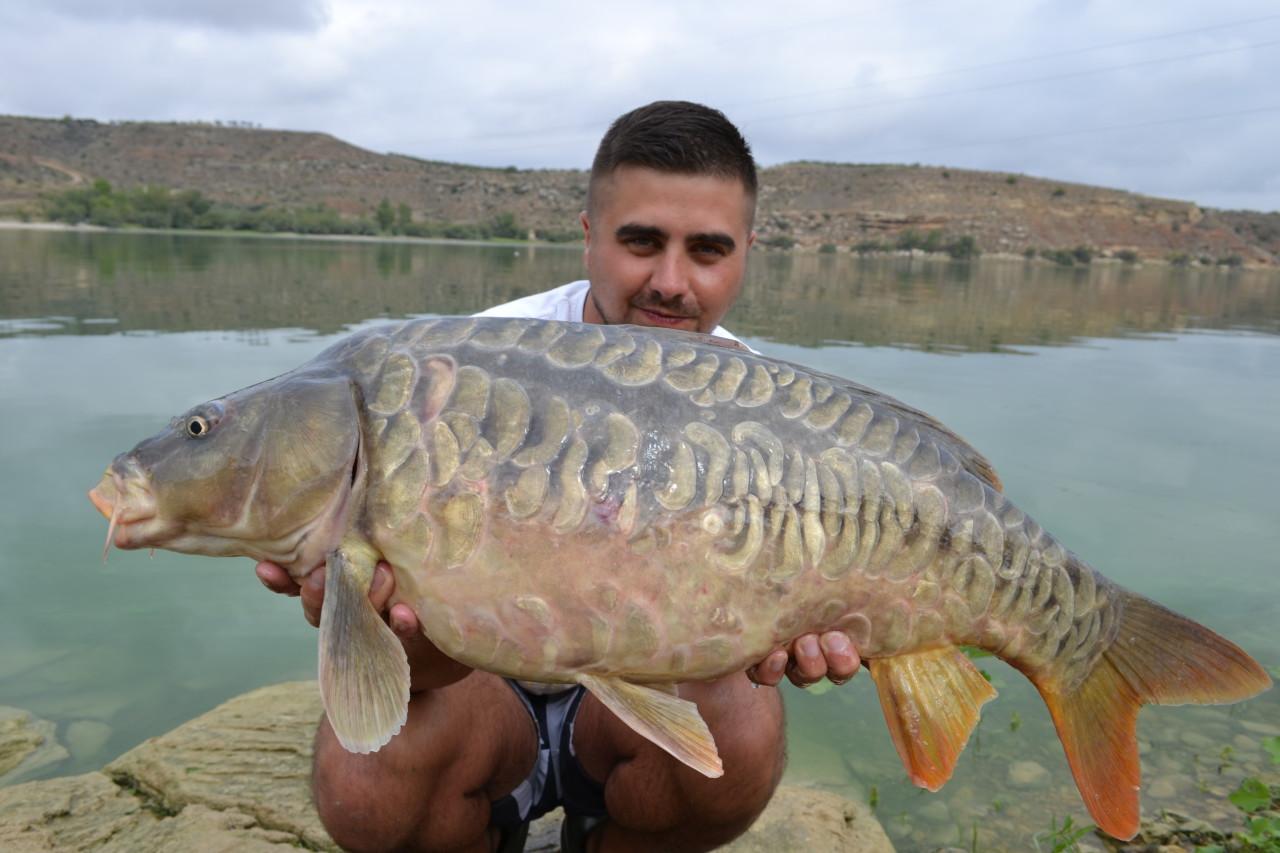 Karpiowanie nad Ebro