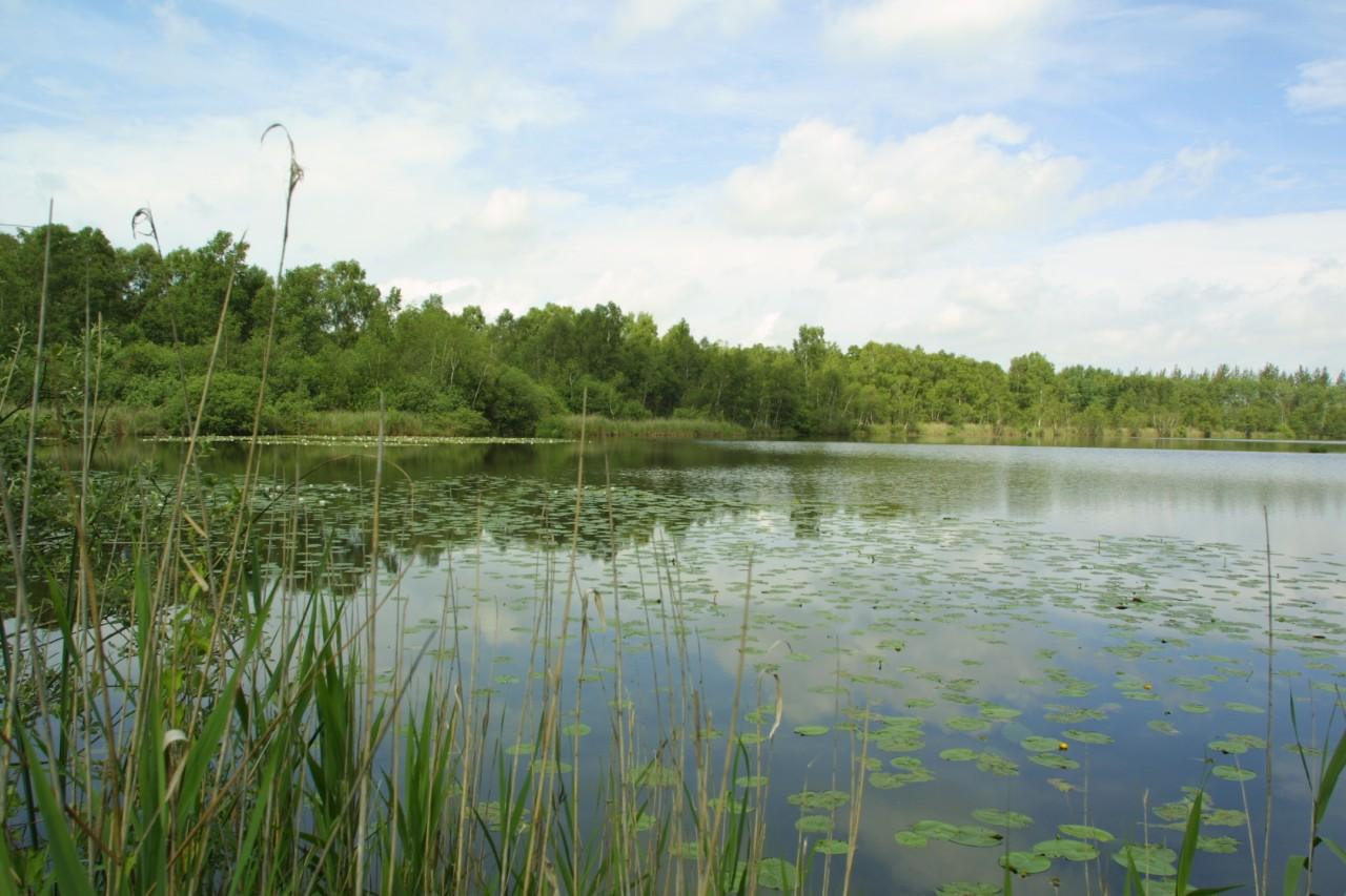 letnie łowisko karpiowe
