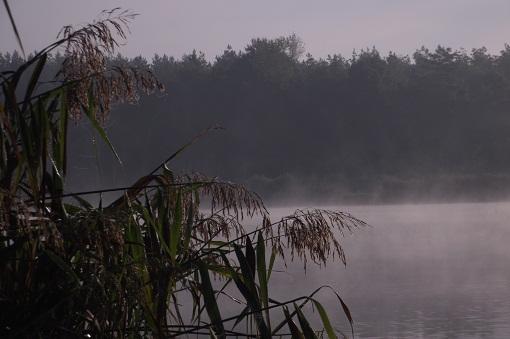 łowienie karpi jesienią